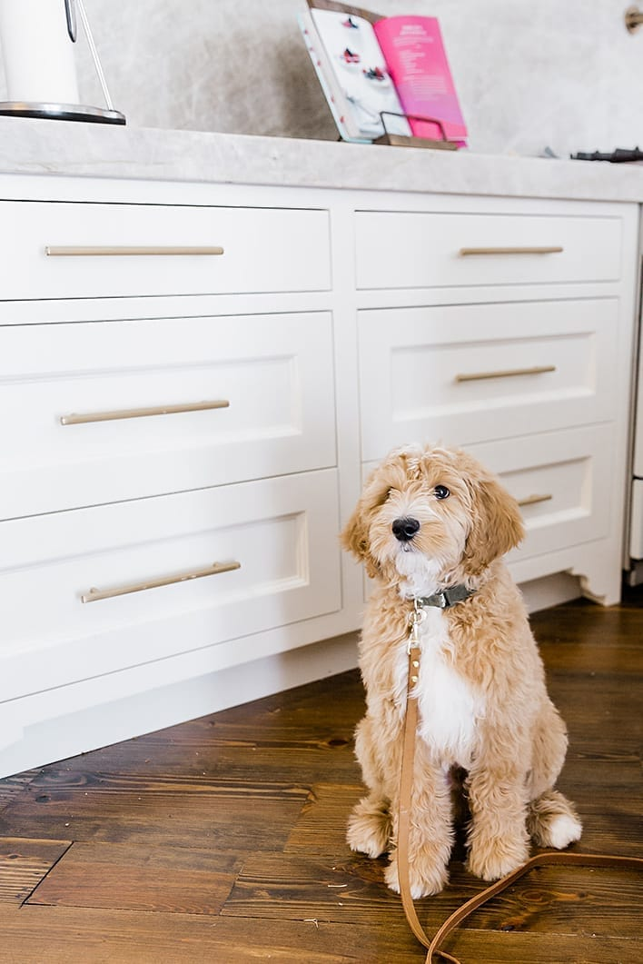 Gold hardware with GoldenDoodle puppy. Benjamin Moore White Dove kitchen cabinets.